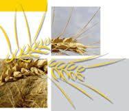 Jornadas sobre tasación de daños en frutales y cereales
