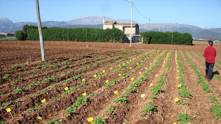 Investigadores de la UPNA realizan las tablas de tasación de daños provocados en cultivos por pedrisco y heladas