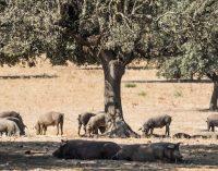 Extremadura: Valor real de determinados bienes inmuebles de naturaleza rústica